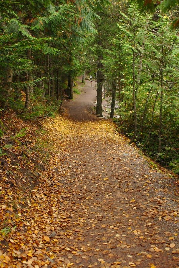 Autumn Leaves sur Cedar Path en glacier photos stock