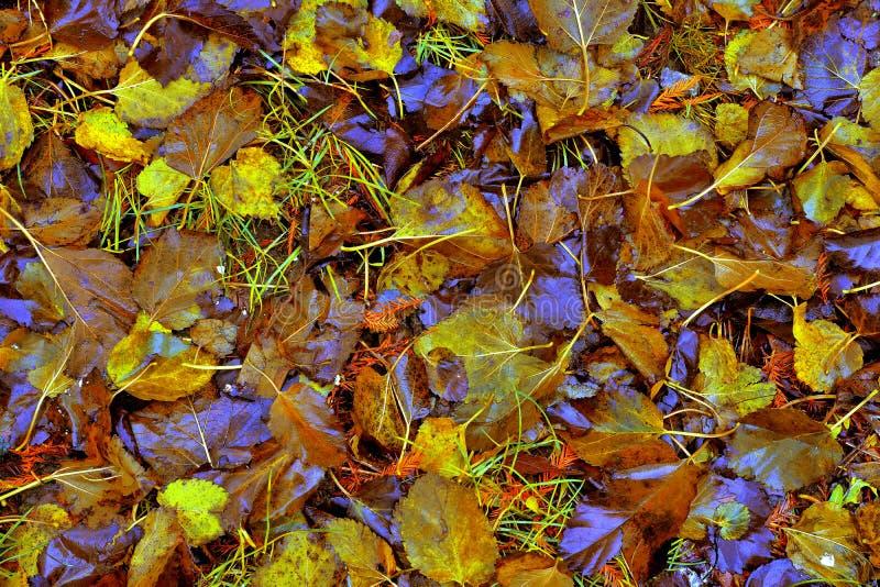 Autumn Leaves Texture imagem de stock