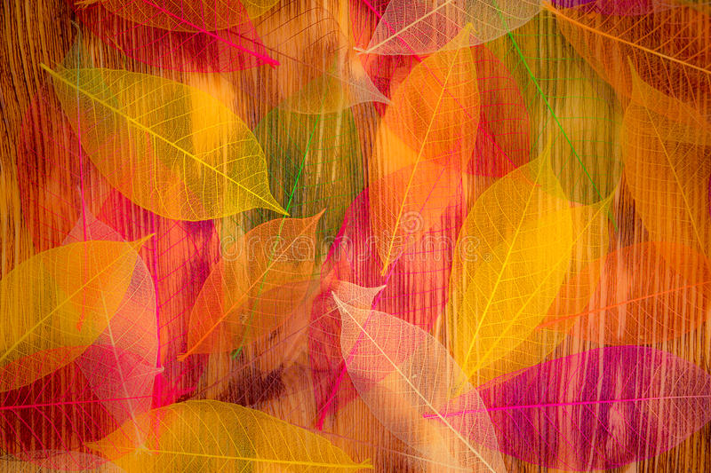 Autumn Leaves Texture fotografia de stock