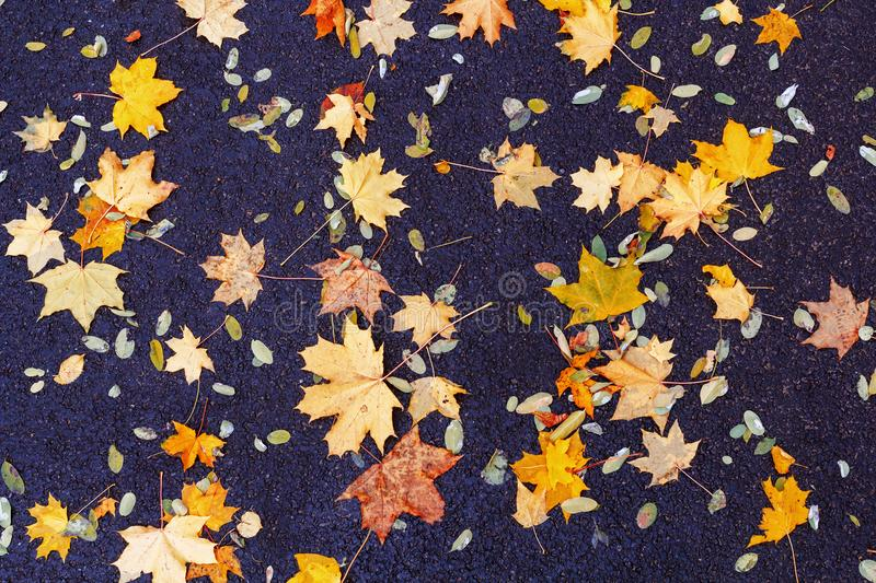 Autumn leaves texture. Autumn leaves background. Fallen leaves in autumn on the asphalt. Texture. Background of autumn leaves royalty free stock images