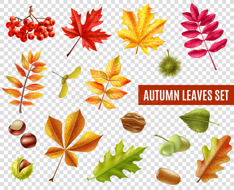 Autumn Leaves Transparent Set illustration libre de droits