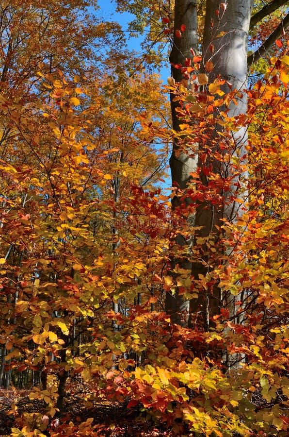 Autumn Leaves Tree fotografia stock libera da diritti