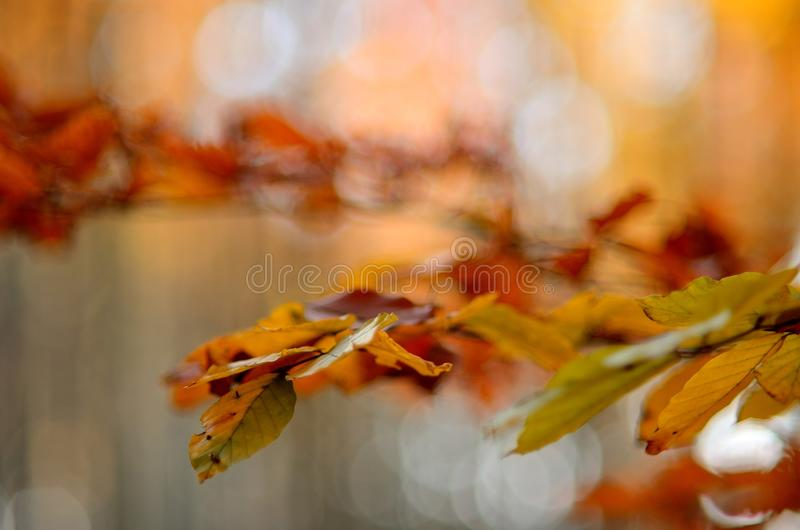 Autumn Leaves Tree 3 images stock