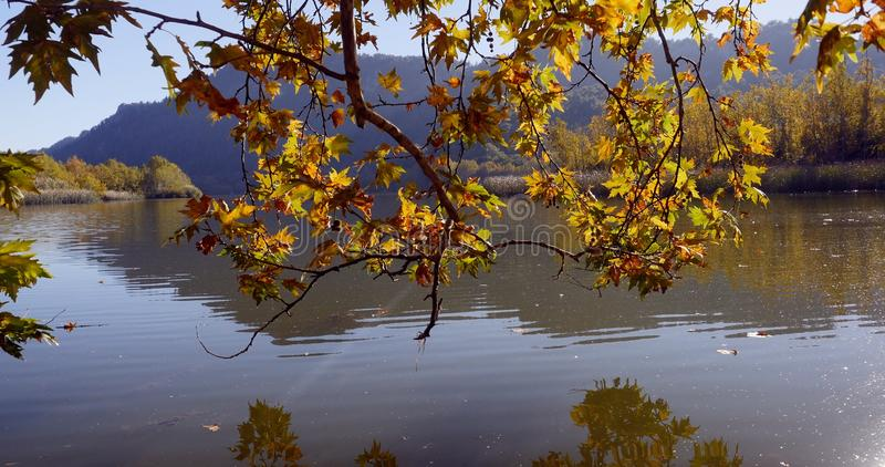 Autumn leaves on tree branch above the lake. In a frame tree branch with yellow autumn leaves on a background of lake and mountains stock image