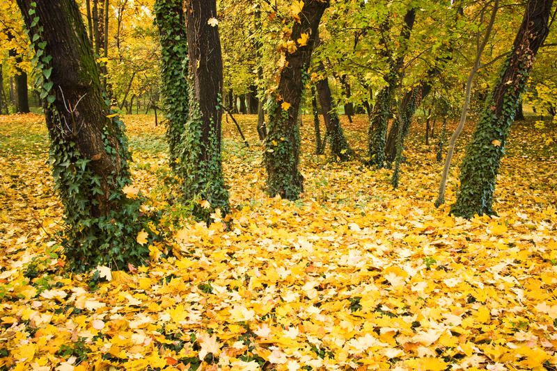 Download Autumn leaves and trees stock photo. Image of natural - 10628936