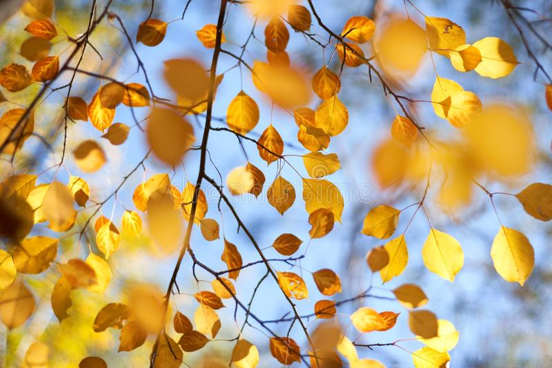 Download Autumn leaves on the trees stock photo. Image of wilting - 16131238