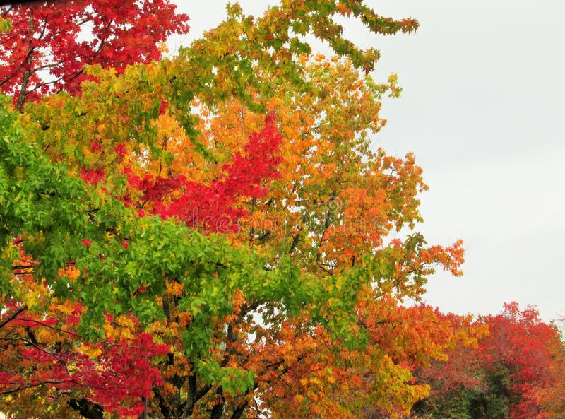 Beautiful Autumn Colorful Leaves And Trees Scenery In Urban Vancouver 2019. Beautiful Bright Autumn Colorful Of Red, Yellow, Green, Orange  Leaves And Trees stock image