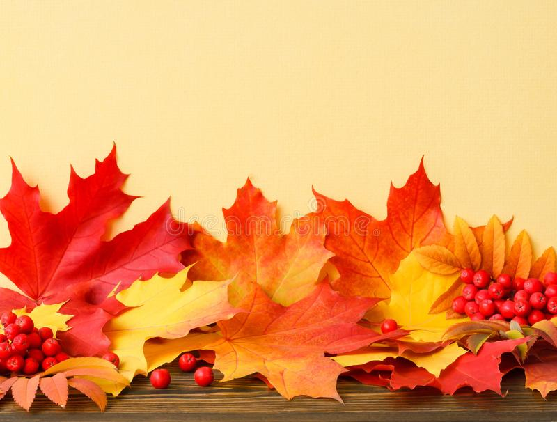Autumn leaves and two bunches of red mountain ash on a wooden table and yellow wall stock photos
