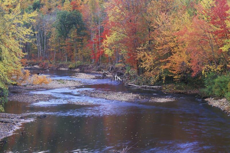 Autumn Leaves By una corrente, montagne di Adirondack, New York fotografia stock libera da diritti