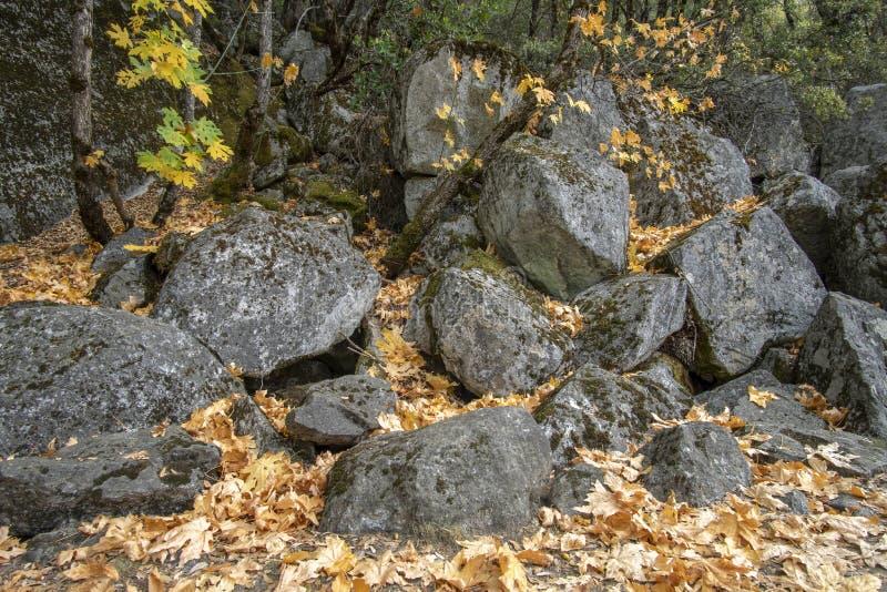 Autumn Leaves und Grey Rocks in Yosemite stockfotografie