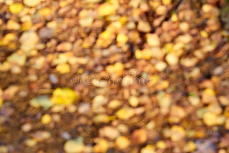 Autumn Leaves Vage achtergrond bokeh stock afbeelding