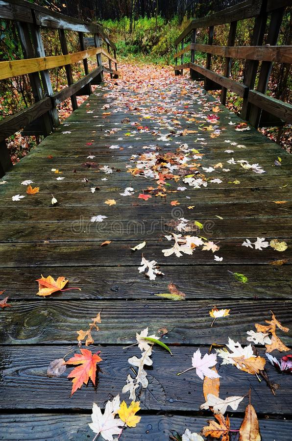 Autumn Leaves variopinto su un ponte di legno del piede fotografia stock libera da diritti