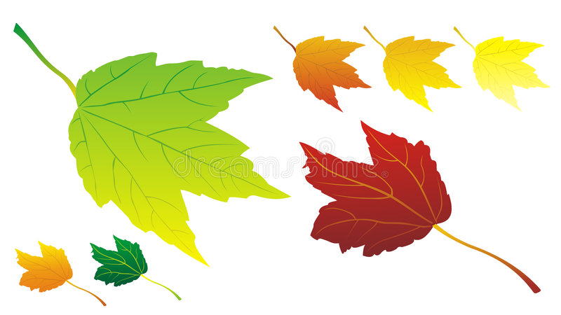 Autumn leaves in vector