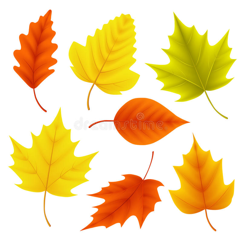 Free Autumn Leaves Vector Set For Fall Seasonal Elements With Maple And Oak Leaf Royalty Free Stock Image - 96499316