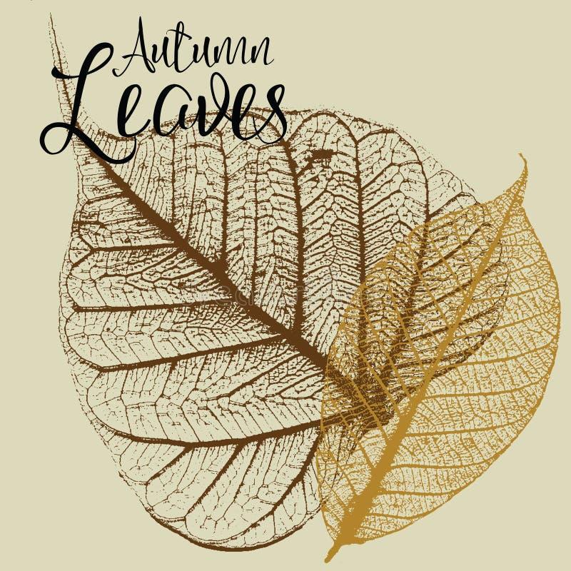 Autumn Leaves Vectors stock illustration