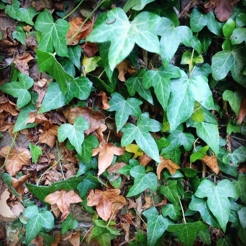 Autumn leaves stock images