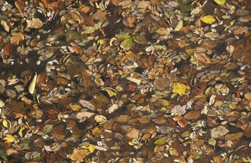 Autumn Leaves, Washington, D C imágenes de archivo libres de regalías
