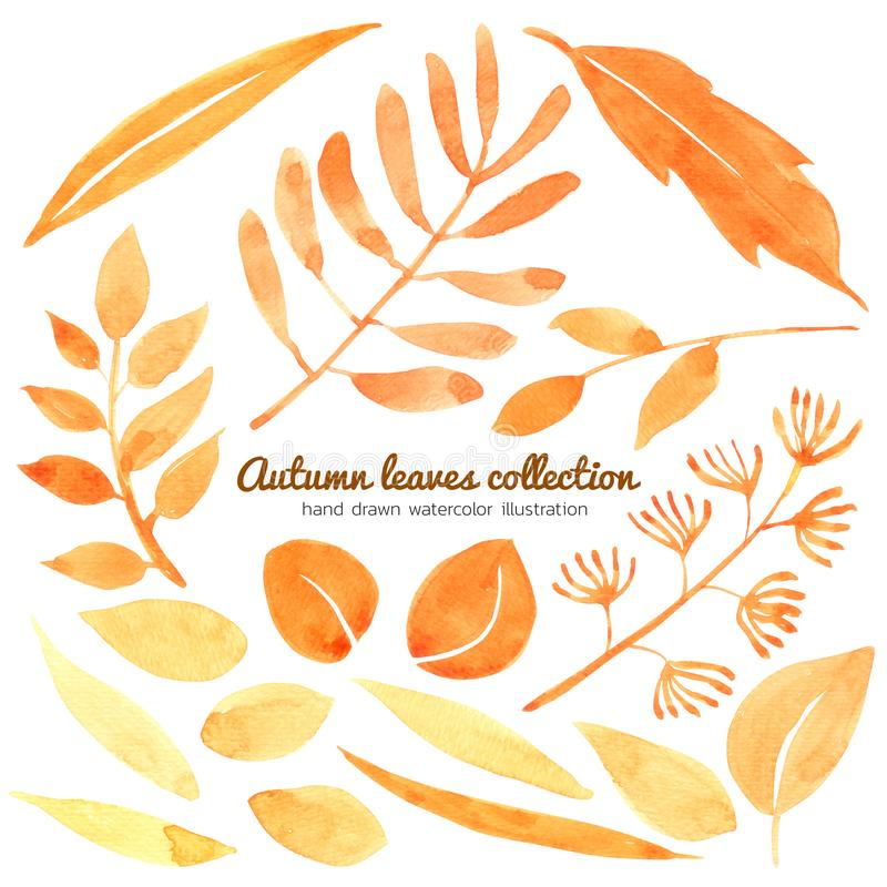 Autumn Leaves watercolor collection isolated on white background , Hand drawn painted for Greeting Card ,Wallpaper ,Postcards. Product,Packaging and more royalty free illustration