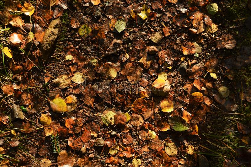 Autumn leaves in the wet ground. In October 2018. Picture taken in Nuuksio, Finland royalty free stock images