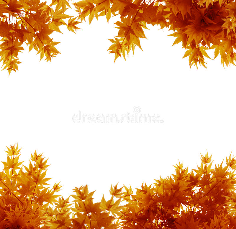 Autumn Leaves on White. Backgroundd royalty free stock photos
