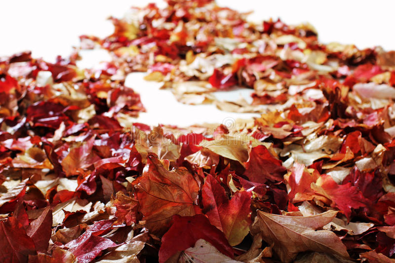 Download Autumn Leaves On White Floor Stock Image - Image: 27257387