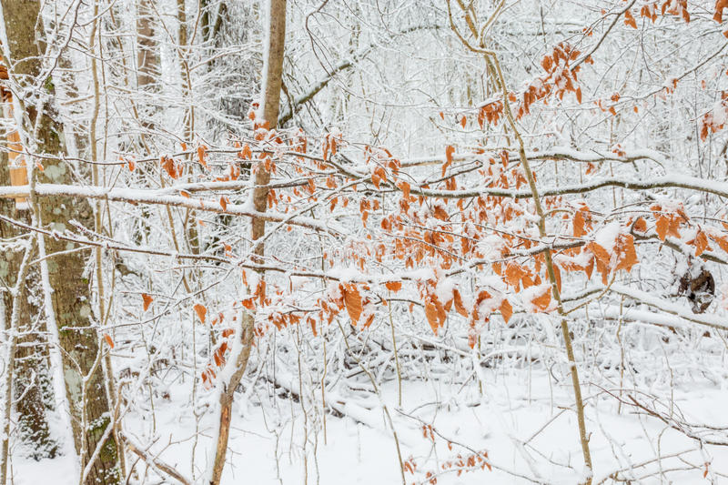 Autumn leaves at winter stock photo
