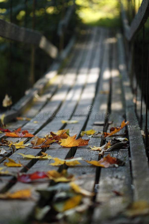 Autumn leaves on wood bridge royalty free stock images