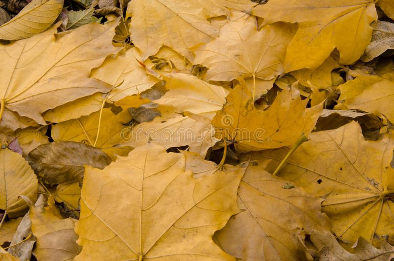 Autumn leaves on wooden background stock photography