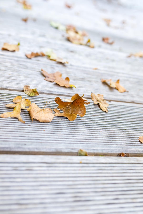Download Autumn leaves stock image. Image of sunlight, nature - 33091765