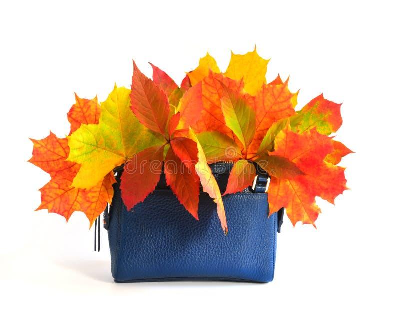 Autumn Leaves y bolso fotografía de archivo libre de regalías