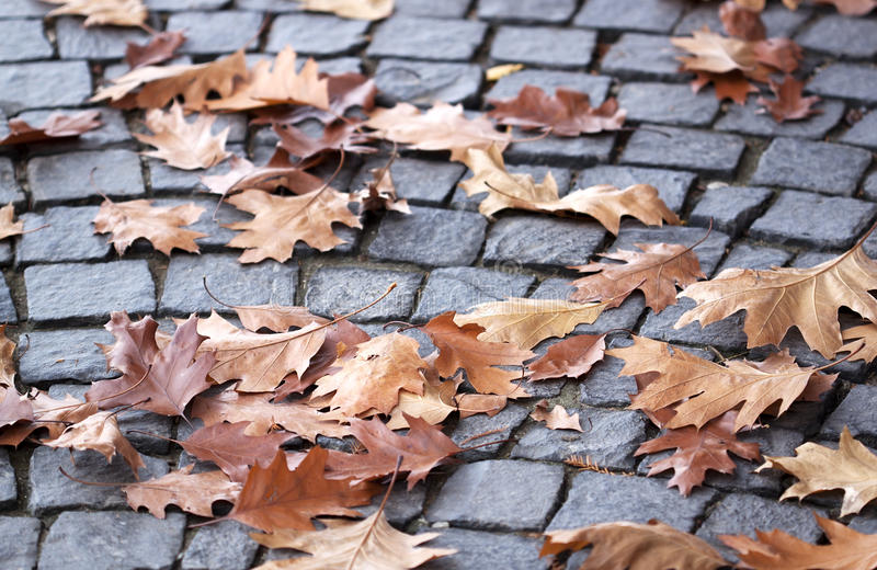 Autumn leaves - RAW format royalty free stock photo