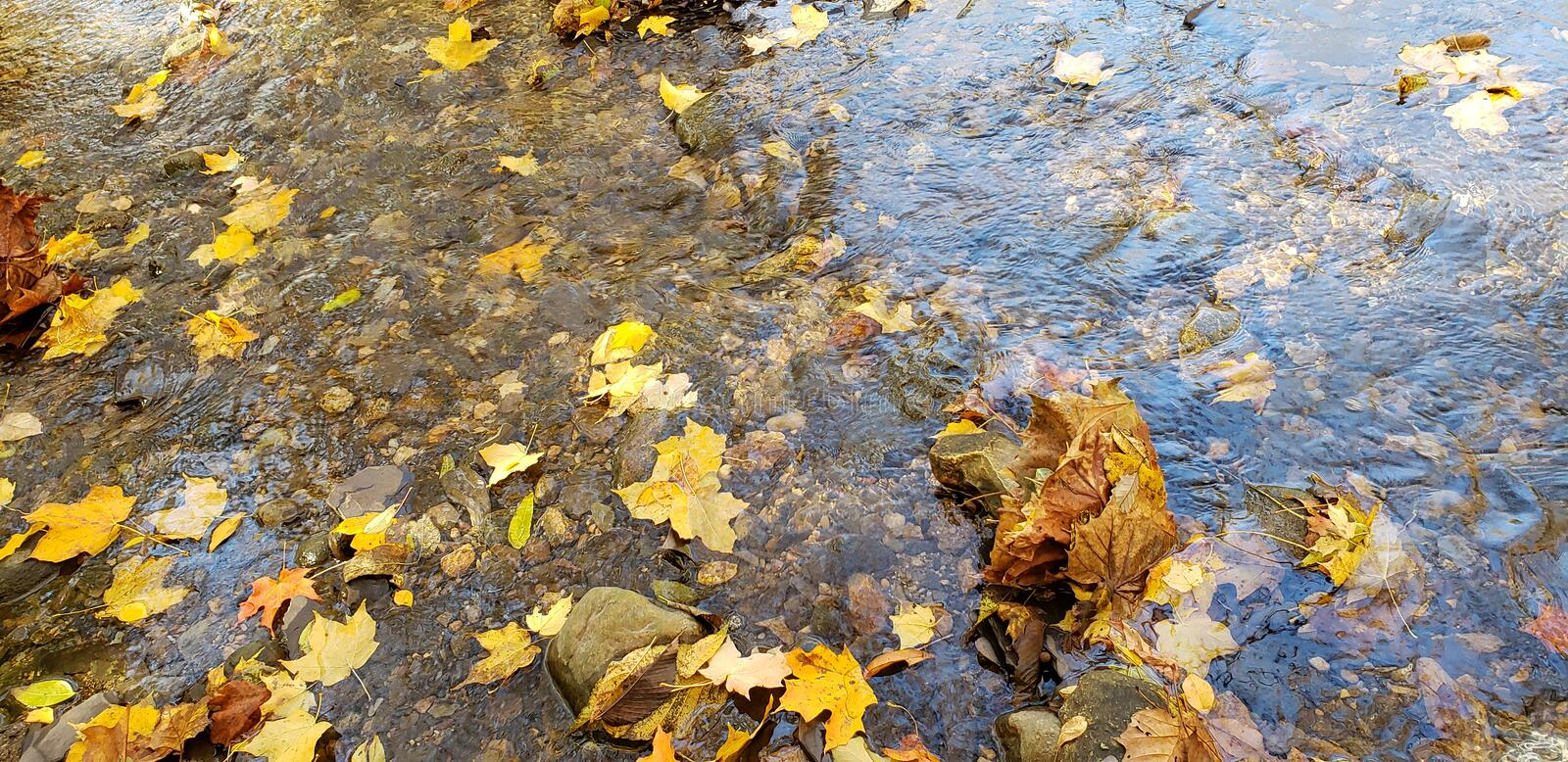 Autumn Leaves. Yellow, spring, river, water, nature, earth, fall, leaf, scenix, scenic, tranquil royalty free stock photography