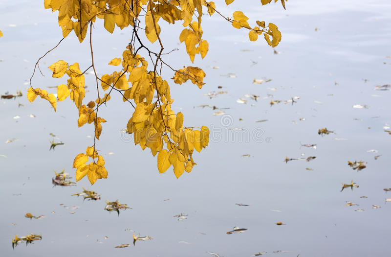 Autumn leaves - RAW format stock images