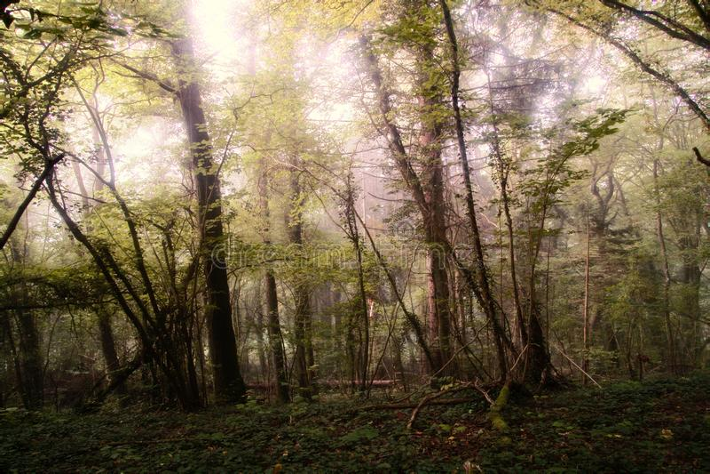 Autumn Linden-Baumwald am sonnigen Tag lizenzfreie stockbilder