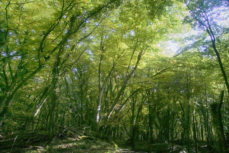 Autumn Linden-Baumwald am sonnigen Tag lizenzfreie stockfotografie
