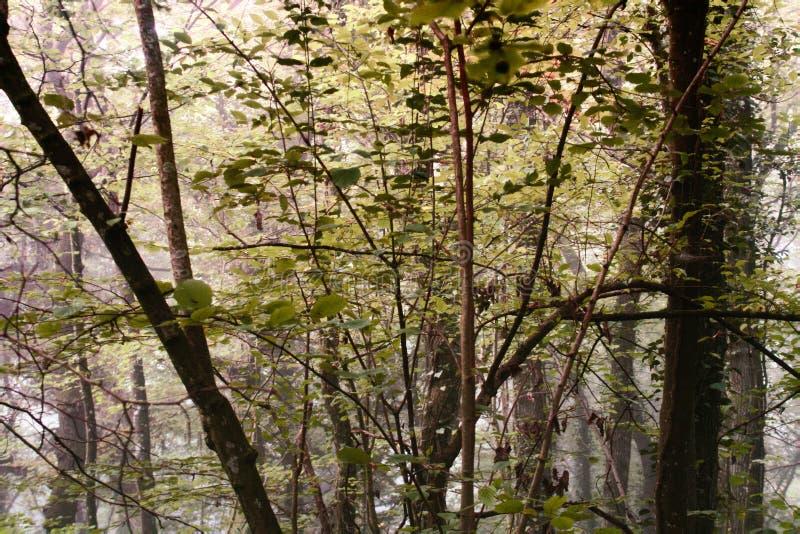 Autumn Linden-Baumwald am sonnigen Tag stockfoto
