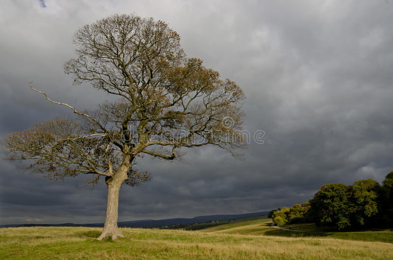 Autumn lonely tree growing in the Lyme Park, England. Green lonely tree growing in the Lyme Park, England stock photography