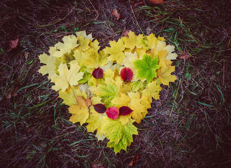 Autumn love. autumn time royalty free stock images