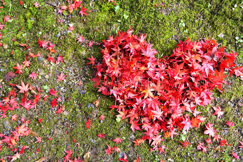 Autumn Love royalty free stock images
