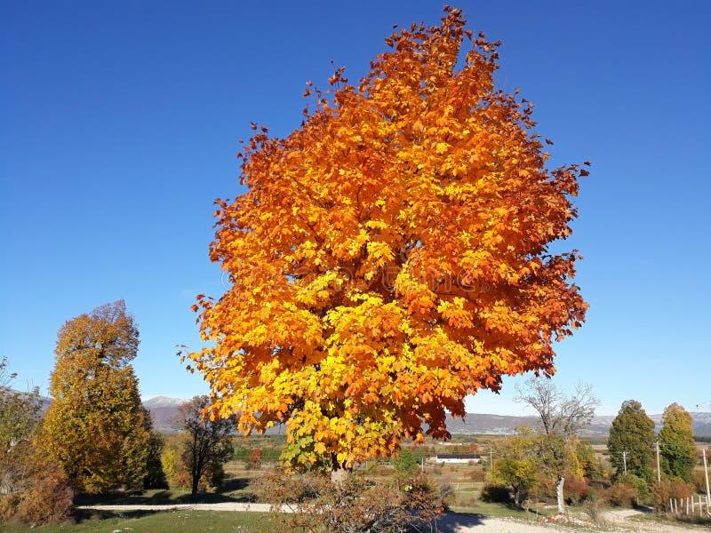 Autumn magic stock photo
