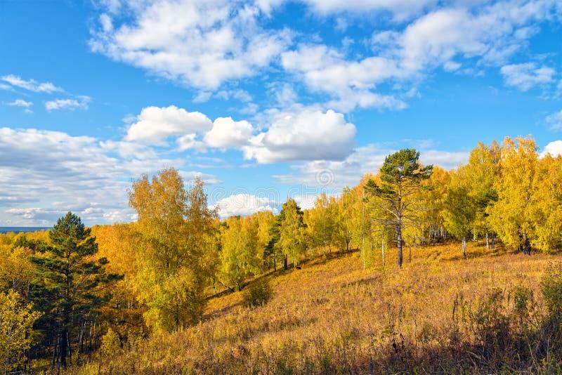 Autumn Majestic Scenery: Colina cubierta por el bosque de la caída y el cielo azul con las nubes blancas fotografía de archivo libre de regalías