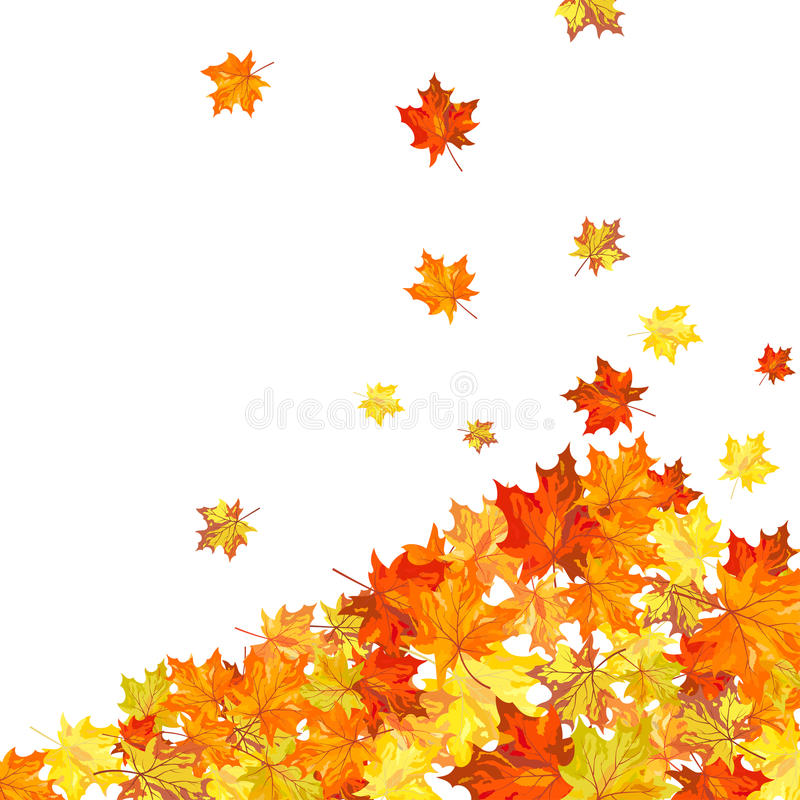 Download Autumn maple stock vector. Image of beautiful, blank - 27270494