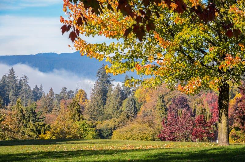 Autumn Maple-Bäume bei Stanley Park in Vancouver, britisches Columnb stockfoto