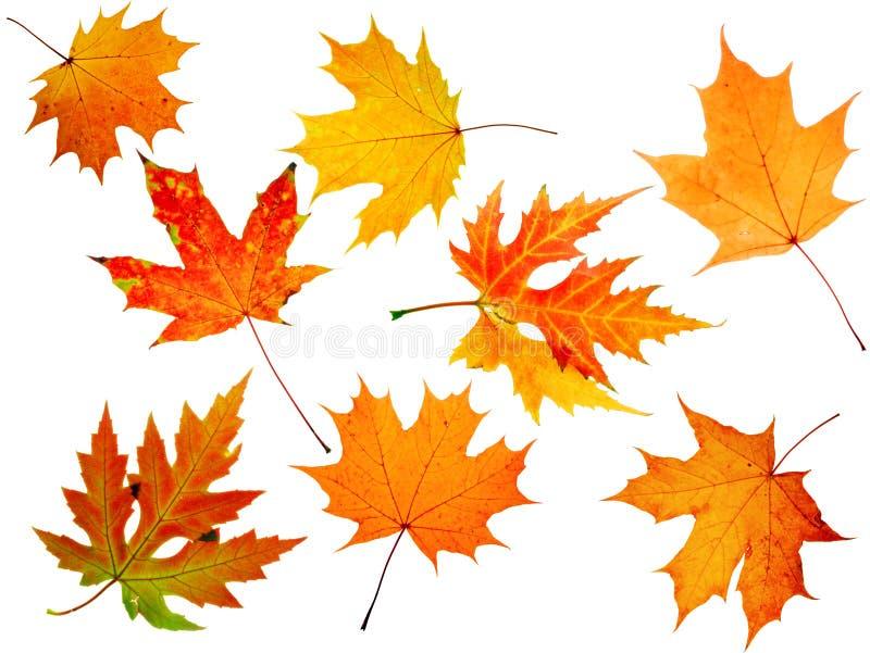 Download Autumn maple-leaf stock image. Image of background, life - 6895153