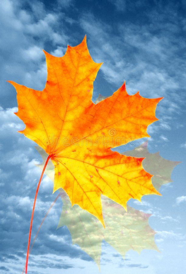 Autumn maple leaf and sky stock photography