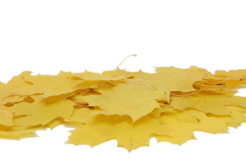 Download Autumn maple leaves stock photo. Image of backgrounds - 11880844