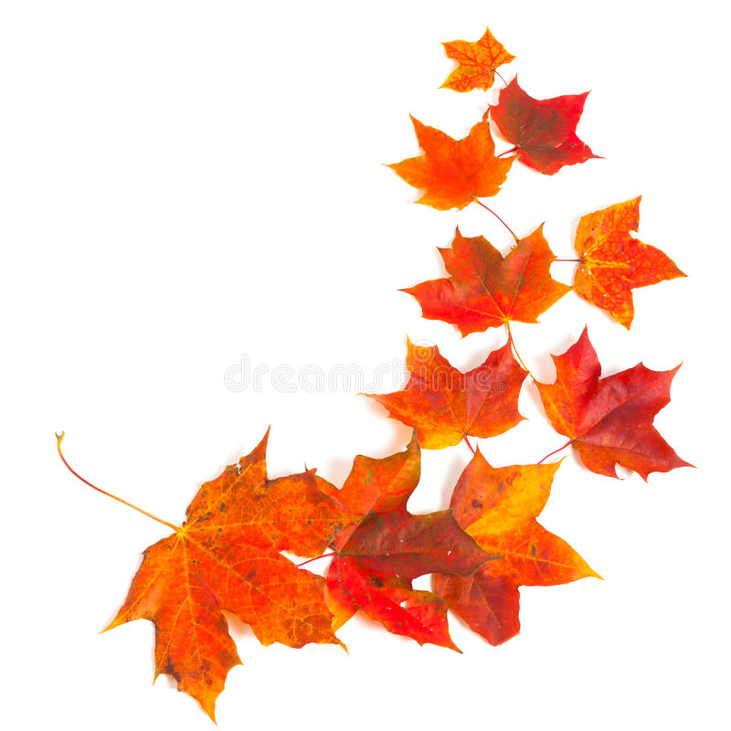 Download Autumn maple leaves stock image. Image of golden, border - 26813079