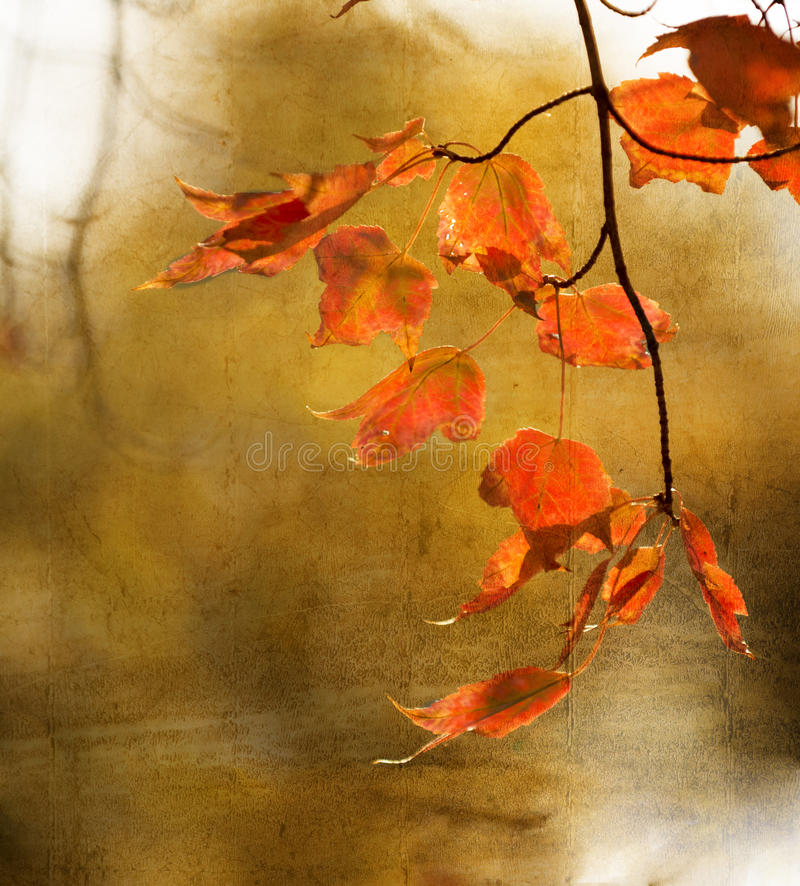 Download Autumn Maple Leaves Background Stock Image - Image: 38782189
