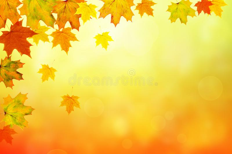 Autumn maple leaves bright nature bokeh background royalty free stock photo