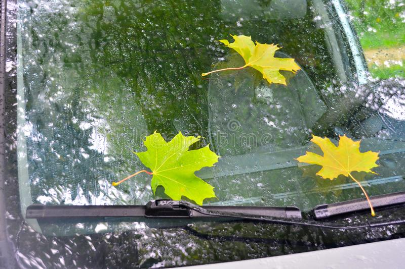 Autumn maple leaves on a car windshield wet from rain stock photos